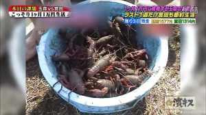 Hamaguchi's Crayfish 1